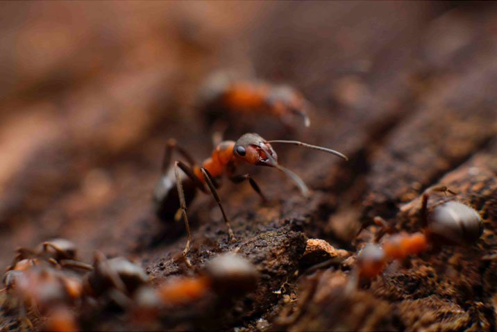 Selective focus of an ant moving across the ground.