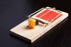 Mousetrap baited with cheese to control rodents.